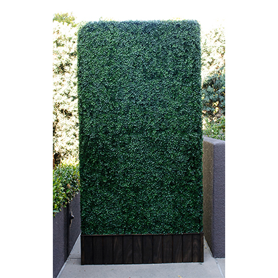 4'x8' Hedge Wall Free standing  www.Raphaels.com - Call to place your rental order today! 858-689-7368 - www.raphaels.com